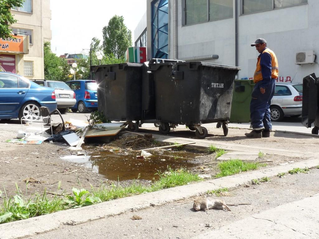 Редовна гледка в Студентски град: мръсотия и мъртви животни по улиците.